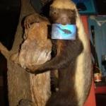muff-diving-club-honey-badger